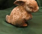 Rabbit Miss Daisy